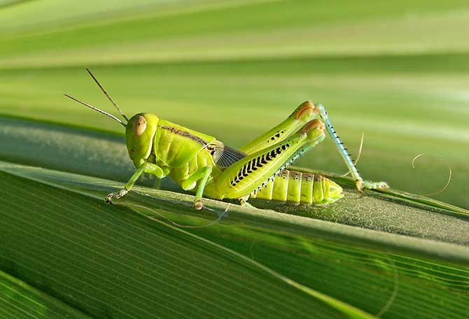 Grasshopper Master Quotes. QuotesGram